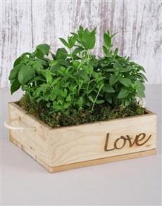 gifts: Herb Garden in Wooden Flower Box!