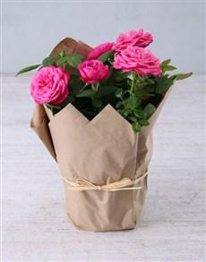 flowers: Cerise Rose Bush in Craft Paper !