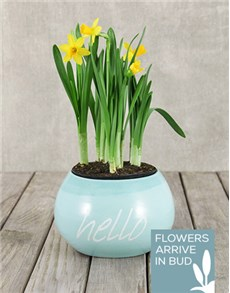 gifts: Daffodil Plant in Hello Pot!
