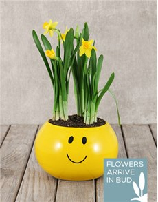 gifts: Daffodil Plant in Smiley Pot!