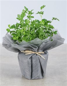 flowers: Parsley Herbs in Wrapping!