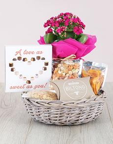 gifts: Kalanchoe and Snacks Basket!