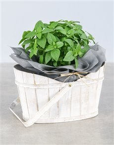 gifts: Basil Herbs in White Basket!