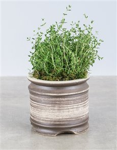 plants: Thyme Herbs in Ceramic Pot!