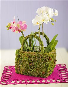 flowers: Double Mini Orchids in a Moss Basket!