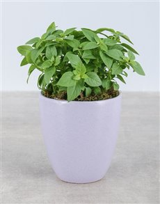 gifts: Basil Herbs in Glazed Pot!