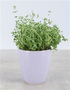 gifts: Thyme Herbs in Glazed Pot!