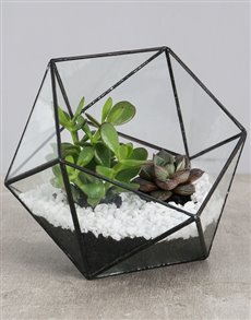 plants: Succulent With White Stones in a Terrarium!