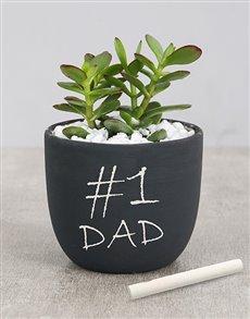 plants: Succulent in Chalk Pot!