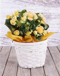 flowers: Yellow Begonia Basket!