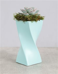 plants: Succulent in a Twisty Vase!