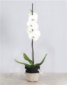flowers: White Phalaenopsis Orchid Basket!