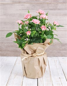 plants: Pink Rose Bush in Craft Paper!
