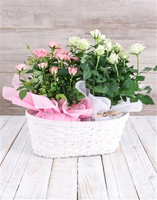 plants: Double Rose Bush Basket!