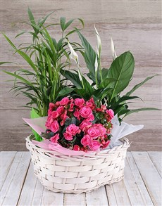 plants: Begonia Jungle Basket!