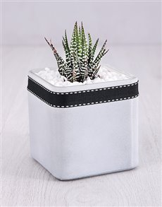plants: White Vase with a Succulent!