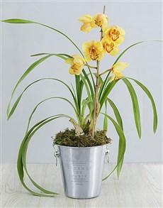 plants: Cymbidium Orchid in Wine Bucket!