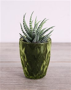 gifts: Desert Arrangement in Green Votive!