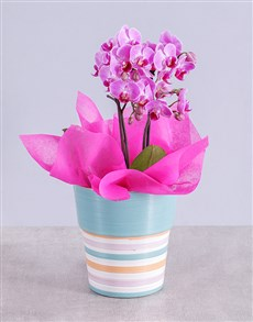 flowers: Midi Pink Orchid in Striped Vase!
