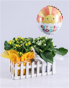 plants: Kalanchoe Plants and Get Well Balloon in Fence!