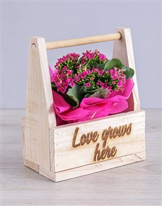 flowers: Love Grows Here Kalanchoe Crate!