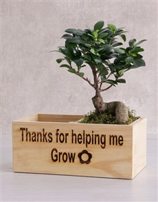 gifts: Thanks for Helping Me Grow Ficus Bonsai Tree !