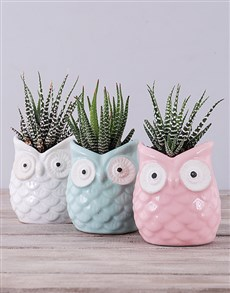 gifts: Ceramic Owl with Succulent!