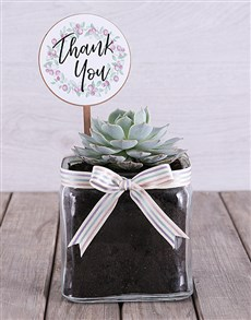 plants: Thank You Succulent in Square Vase!