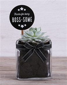plants: Boss Some Succulent in Square Vase!