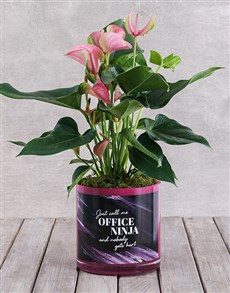 plants: Pink Anthurium in Office Ninja Vase!