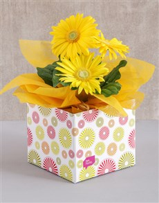 plants: Yellow Mini Gerbera Plant Box!