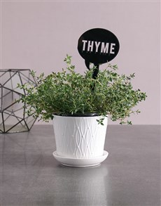 flowers: Herb Plant in White Pot!