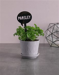 flowers: Herb Plant in Grey Pot!