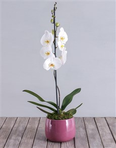 plants: Orchid in Purple Pot!