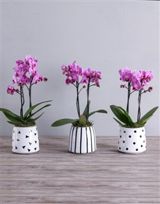 gifts: Pink Midi Phalaenopsis Orchid Pot!