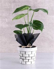 gifts: Monstera Plant in Brick Pot!