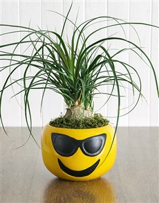 plants: Pony Tail Palm in Sunglasses Emoji Pot!