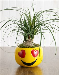 plants: Pony Tail Palm in Heart Eyes Emoji Pot!