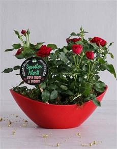 plants: Spoiler Alert Red Rose Bush!