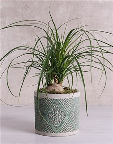 plants: Beaucarnea in Green Patterned Vase!