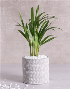 flowers: Love Palm in Grey Vase!