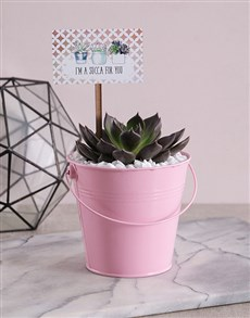 plants: Succa For You Pink Succulent Bucket!