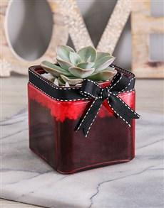 plants: Mini Succulent Vase!