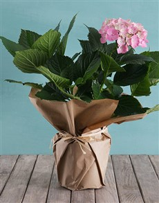 plants: Pink Hydrangea in Craft Paper!