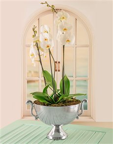 plants: Orchids in Silver Bowl!