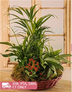 flowers: Green Leafy Plants in a Woven Wicker Basket!