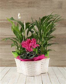 flowers: Trio of Plants in a Woven Round Basket!