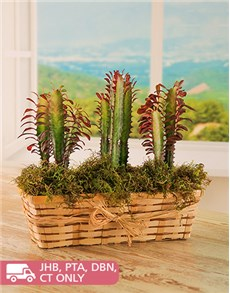plants: Three is a Crowd Cacti Planter!