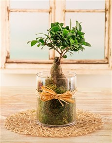 plants: Bonsai Tree in a Cylinder Vase!