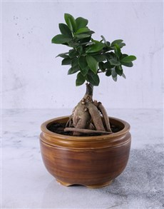 flowers: Bonsai Tree in Pottery!